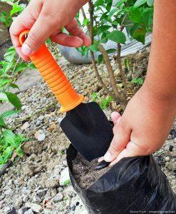 gardening tools - trowel