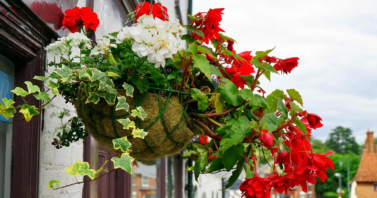 Plant a Seasonal Hanging Basket