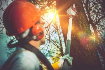 Tree Lopper